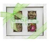OXALIS Adikia bílá - set kvetoucích čajů