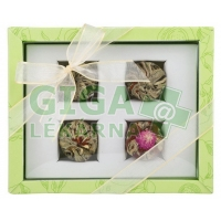OXALIS Adikia zelená - set kvetoucích čajů